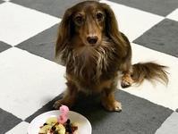 18年8月10日  あんず、3歳のお誕生日! - 旅行犬 さくら 桃子 あんず 日記