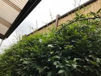 早朝の庭仕事 - refresh-3