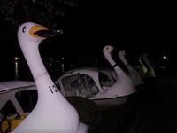 陸に上がった白鳥たち - みとぶら