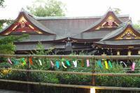 京の七夕 2 - 浜千鳥写真館