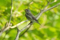 里山の若鳥たち - 近隣の野鳥を探して