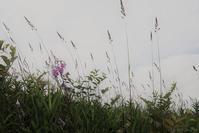 お花市 - フォトな日々