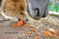 うまうまニンジン 馬 馬 イヌ - 赤柴 の ほとり
