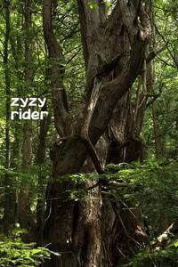 森の聖人 - ジージーライダーの自然彩彩