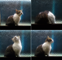 モザイク猫の雨宿り - いぬのおなら