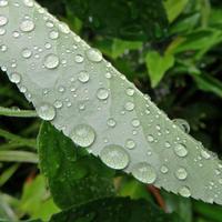 通り雨 - にゃルニア日記