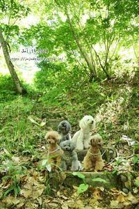 目的地は「檜枝岐村」 - My time...5人の天使と Ⅱ