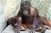 夏でも元気な「アピ」 - 動物園放浪記