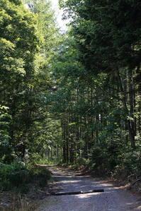 撮影は森林を越えて ~旭川空港~ - 自由な空と雲と気まぐれと ~ from  旭川空港 ~
