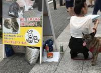 署名活動 - ☆保護猫*ときどき*うち猫☆