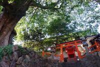 奈良燈花会(1)2018-08-06 - (新)トラちゃん&ちー・明日葉 観察日記