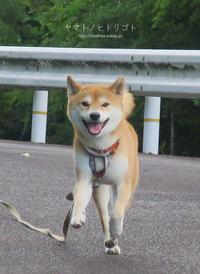 短い人生、人生楽しんだもん勝ちさ! - yamatoのひとりごと