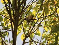 今日の鳥さん 180809 - 万願寺通信