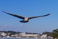 松島とカモメ - 彩りの軌跡