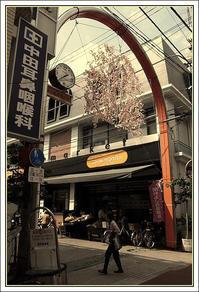 染井銀座商店街 -1 - Camellia-shige Gallery 2