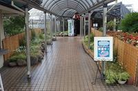 本日より『市花さぎ草展』開催! - 手柄山温室植物園ブログ 『山の上から花だより』