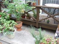 夏休み - 柴犬 ひろゆきと さもない毎日&週末自宅カフェ里音 (りをん) 一之江・笑い療法士のいるカフェ
