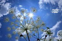 日傘にもならない - ジージーライダーの自然彩彩