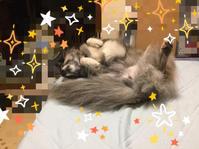 スッキリおしり - 琉球犬mix白トゥラーのピカ