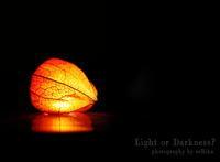 鬼灯 - Light or Darkness?