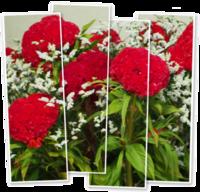 お盆の花事情 - ひとりあそび