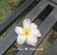 Garden Island Kauai 6枚花弁のプルメリア No.13 - 私らしく輝いて*  毎日が Ribbon Days *