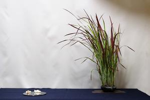 紅チガヤと水草 - 雨宮園 ☆~盆栽・山野草・陶芸~☆趣味が仕事でも・・・。