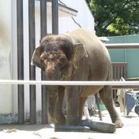World Elephant Day - ボルネオゾウのふくちゃん ~ふくちゃんへの恩返し~