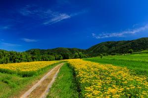 夏の花畑2018 越畑の女郎花 - 花景色-K.W.C. PhotoBlog