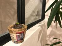 サボテンガチャのその後。。。 - ブレスガーデン Breath Garden 大阪・泉南のお花屋さんです。バルーンもはじめました。