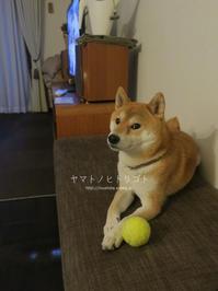 """""""仕掛ける"""" 【動画あり】 - yamatoのひとりごと"""
