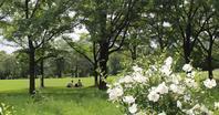 夏の百合が原公園に行きました。 - ワイン好きの料理おたく 雑記帳