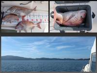 5キロの大鯛 - MATSUDAS