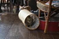 しゃかトン遊びとたそがれる猫 - りきの毎日