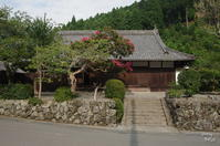 吉野郡 東吉野村を行く:04 百日紅(サルスベリ) - ぶらり記録(写真) 奈良・大阪・・・