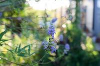 夏庭 最盛期 - お庭のおと