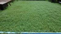 クラピア刈り7回目 - うちの庭の備忘録 green's garden