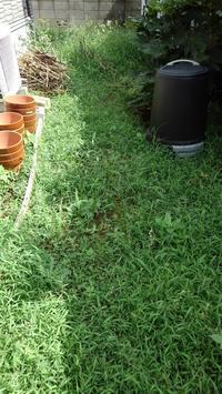 草取り、そして子猫発見(T_T) - うちの庭の備忘録 green's garden