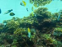 葛西臨海水族園:グレートバリアリーフ【前編】 - 続々・動物園ありマス。