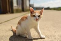 漁港の猫たち2018.08.03 - ちわりくんのありふれた毎日II