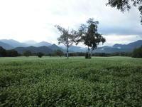 高原はもう秋 - 福島県南会津での山暮らしと制作(陶芸、木工)