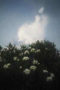 散歩の風景(3cut) -     ~風に乗って~    Present
