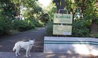Vol.1375 池上新町中緑道 - 小太郎の白っぽい世界