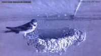 寝床に行く前、巣に立ち寄り - モンスとツバメ2