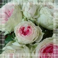 パシュミナ - uhbgt's Blog