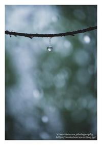 ひとしずく - ♉ mototaurus photography