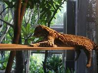 ナイトズーラシア2 - 動物園に嵌り中