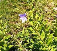 もっとたくさん咲いてくださいね♪ - 金沢犀川温泉 川端の湯宿「滝亭」BLOG
