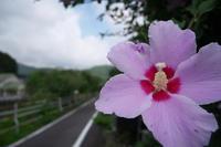 ムクゲの咲く風景 - Change The World