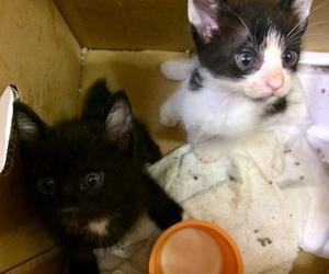 骨折子猫と黒猫軍団と新宿のイベント出店 - 飼い主のいない猫たち